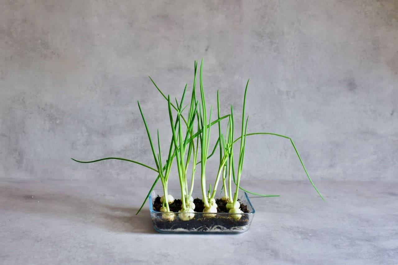 какое растение вырастить с ребенком
